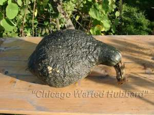 chicago-warted-hubbard