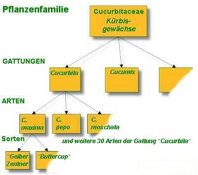 familie-cucubitaceae-web