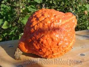golden-hubbard-gewarzt